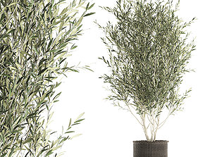 3D model Olive tree for the interior in basket 652