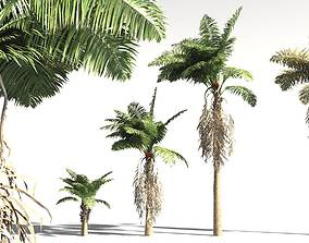 EVERYPlant African Oil Palm 12 -- 10 Models 3D