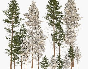 3D Conifer trees Collection 3