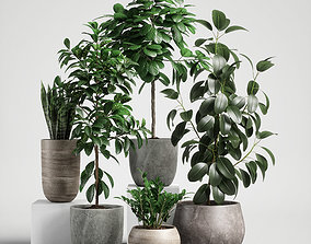 plants set 10 3D pot-plant