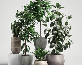 plants set 10 3D