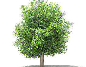3D model exterior Common Fig Tree