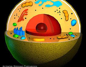 3D Cell cutaway