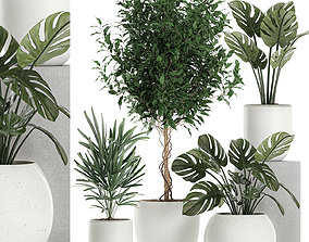 Plants in a white pot for the interior 670 3D