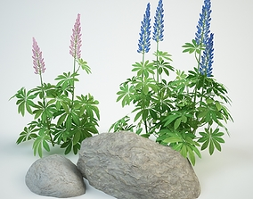 3D lupine composition