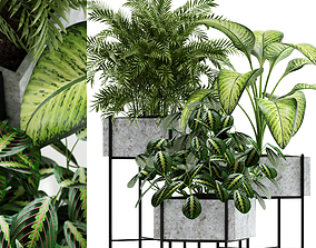 Plants collection 143 Opalo 3D