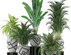 Plants collection 236 3D