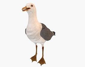 3D model Sea Gull