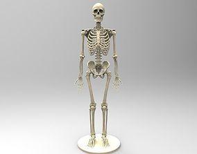 Human Skeleton anatomy 3D print model