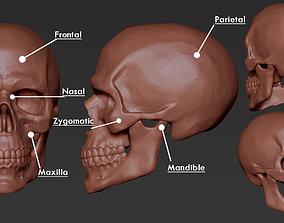 Skull Anatomy 3D printable model