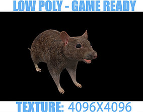 3D model Rat animal