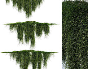 Creeper - Casuarina Glauca - 3 Modular Pieces 3D
