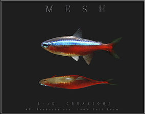 Tetra Fish 3D asset game-ready