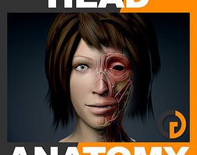 3D model Human Female Head Anatomy skull