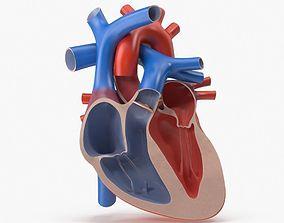 Heart Cutaway 3D model