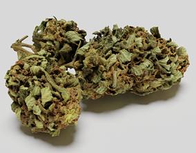 Cannabis Bud 05 3D