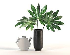 3D Aralia and Vases