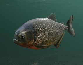3D asset animated Piranha