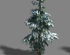 Ice and Snow - Cedar 01 3D model