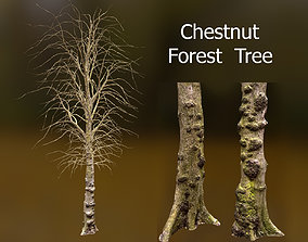 3D model Chestnut Forest Trees Scan