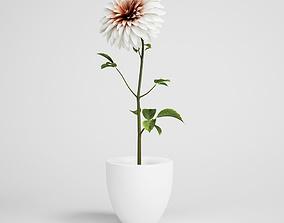 CGAxis flower 3D model decorativ