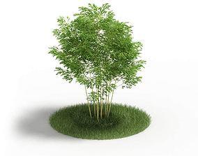 Tree Small Green Leaf 3D