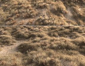 Dried grass 3D model