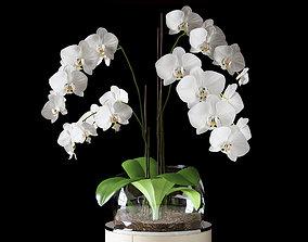 3D Orchid ART Auctor