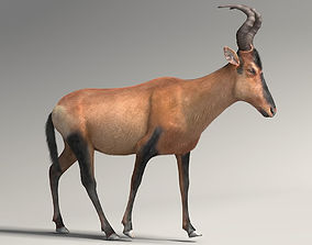 3D animated RED HARTEBEEST