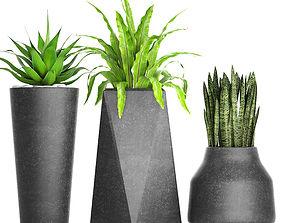 asplenium 3D Plants collection pot