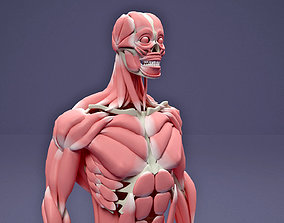 Muscular and Skeletal Systems Of Human Body 3D