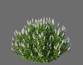 3D XfrogPlants Coastal Pepperbush - Clethra Alnifolia
