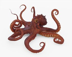 Octopus Posed 3D