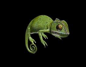 3D asset low-poly Chameleon