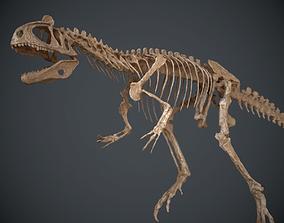3D Allosaurus Skeleton