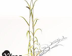 XfrogPlants Wheat 3D model