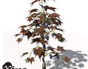 raisin XfrogPlants Grape Vine 3D