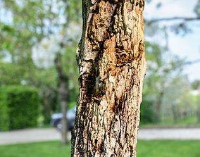 Dead Tree Bark Photorealistic 3D asset