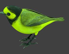3D model lowpoly bird