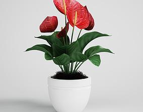 CGAxis flower palm-tree 3D