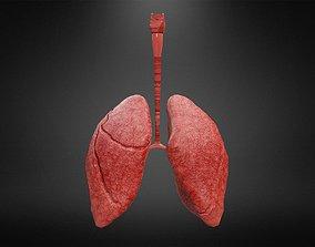 3D asset Human Lungs