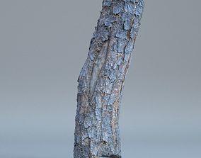 3D Scan - Tree log 01