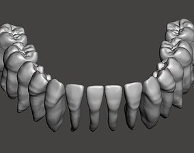Mandibular real human teeth full arch 3D printable model