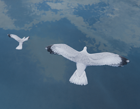 Low Poly Seagull Flock 3D model animated