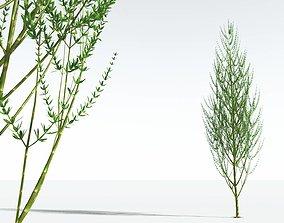 EVERYPlant Ridged Horsetail Tree 12 --12 Models-- 3D