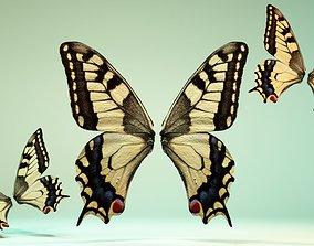 Butterfly-23 3D asset