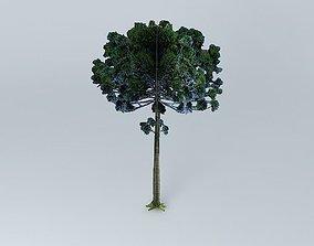 3D Pine Araucaria