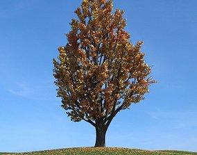 3D Ginkgo Leaf Tree