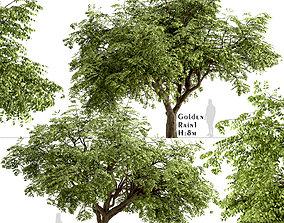 Set of Golden Rain or Koelreuteria Paniculata Trees - 2 3D