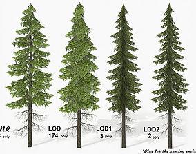 Pine 2 3D asset